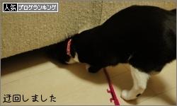 dai20160216_banner.jpg