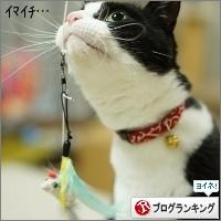 dai20160217_banner.jpg
