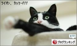 dai20160219_banner.jpg