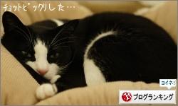 dai20160224_banner.jpg