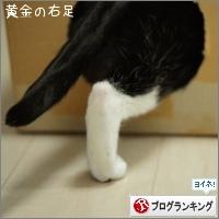 dai20160226_banner.jpg