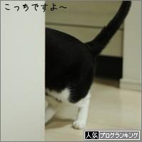 dai20160229_banner.jpg