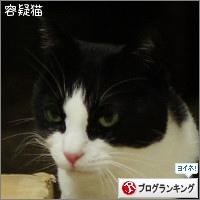 dai20160302_banner.jpg