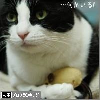 dai20160308_banner.jpg