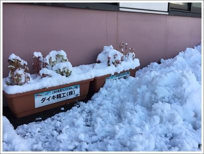 雪の日_20160120_1