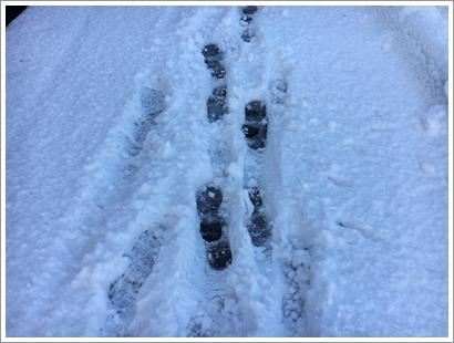 雪の日_20160120_2