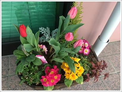 玄関の花_20160224
