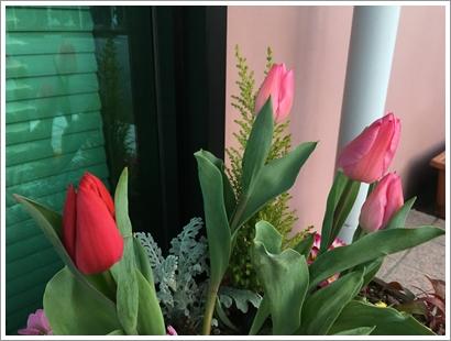 玄関の花_20160224_1