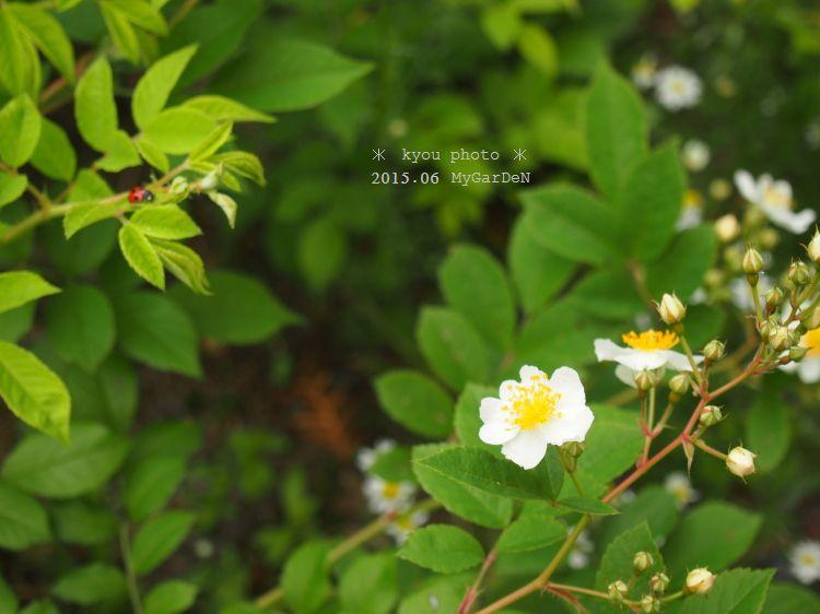 P6160967a.jpg