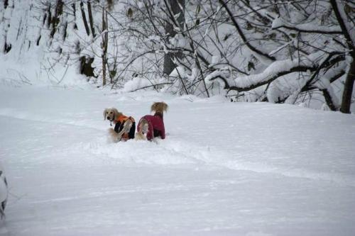 暖冬からの大寒10