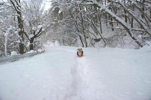 暖冬からの大寒14