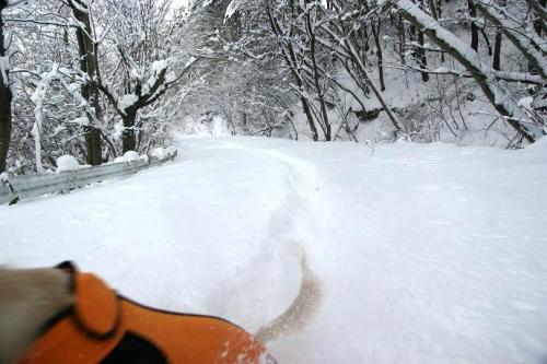 暖冬からの大寒16