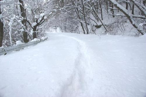 暖冬からの大寒17