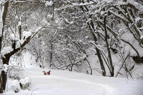 暖冬からの大寒9