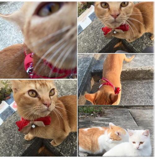 淀川河川敷のネコちゃん 猫