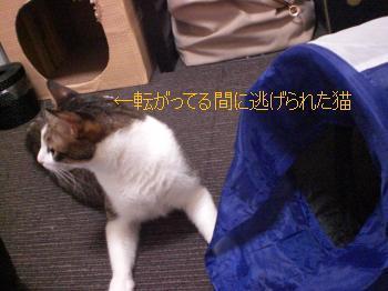 転がってる間に逃げられた猫