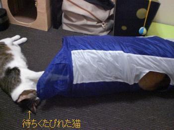 待ちくたびれた猫