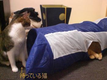 1待っている猫