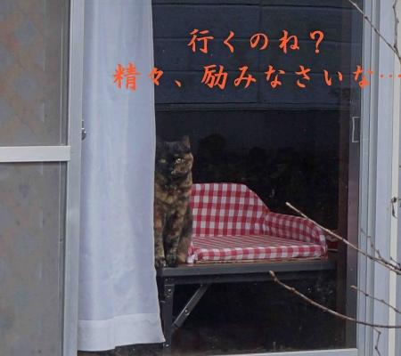 くーちゃん