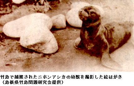 貴重な竹島のアシカ絵はがき