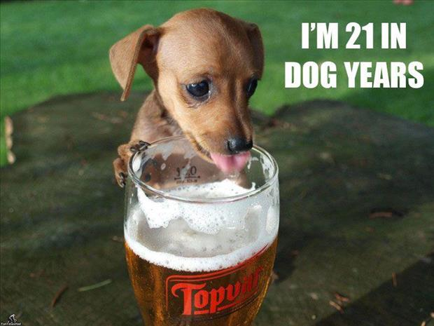 1228dog-drinking-beer