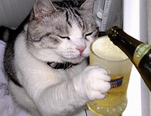 1228cat-drinking-beer