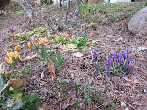 春を・・・待つ