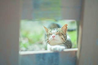 cat0204_2016.jpg
