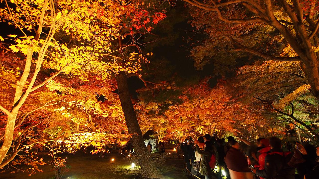 20151129_hogonin_temple-12.jpg