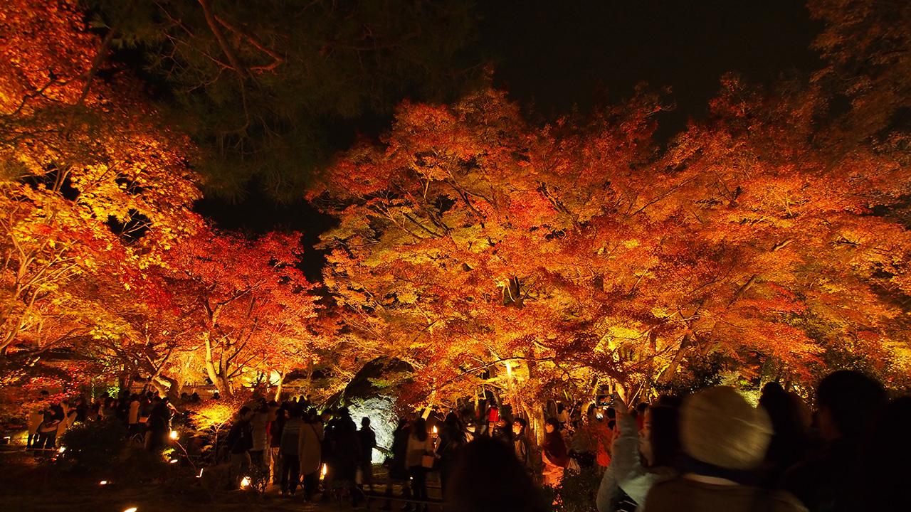 20151129_hogonin_temple-13.jpg