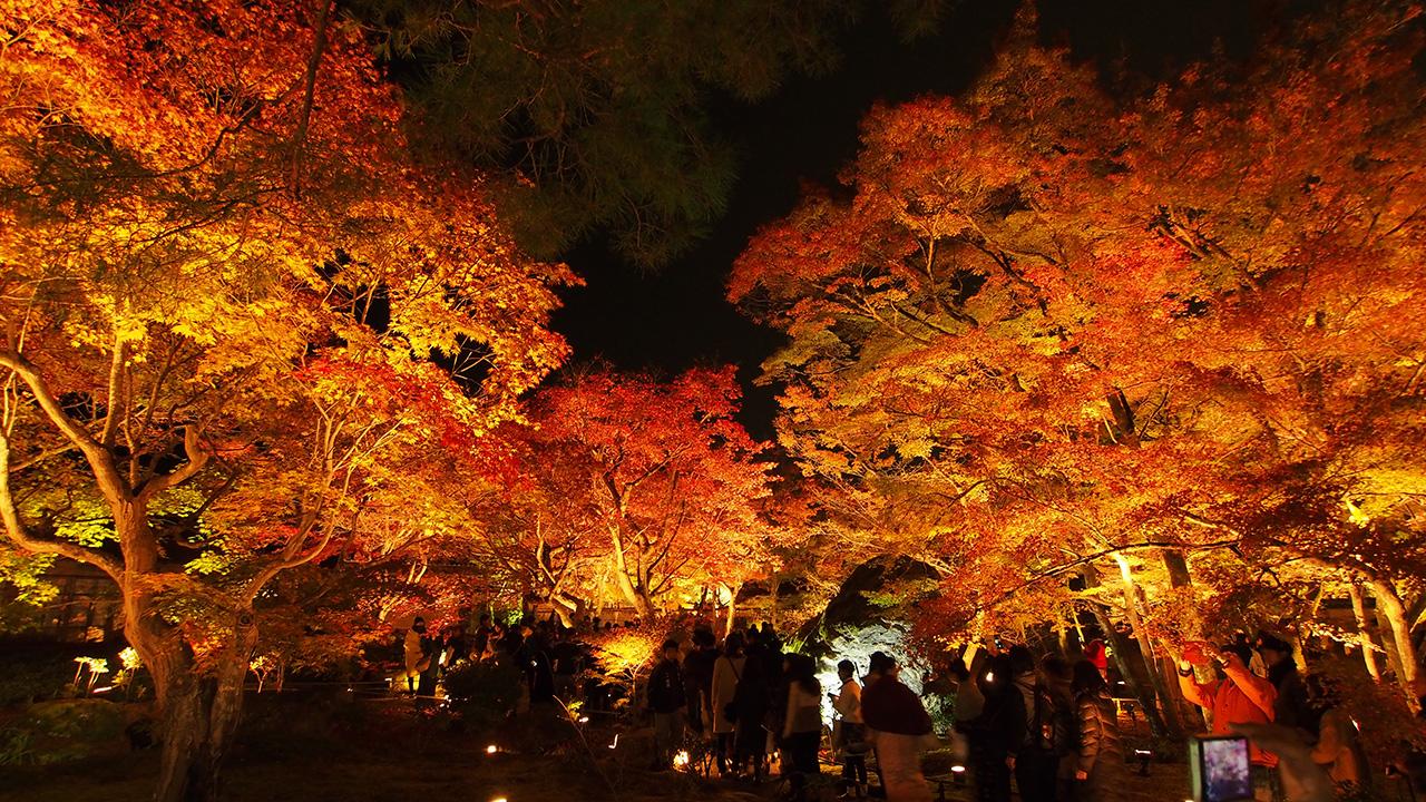 20151129_hogonin_temple-14.jpg