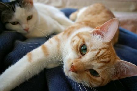 うちの猫写真 260