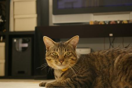 うちの猫写真 506