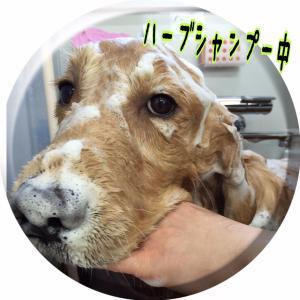 ドレミ風呂_convert_20151230225433