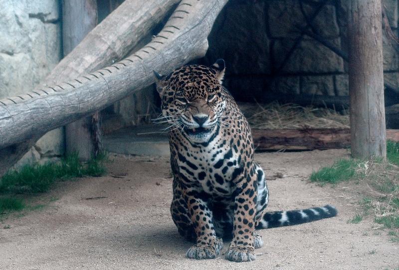 ジャガー3z