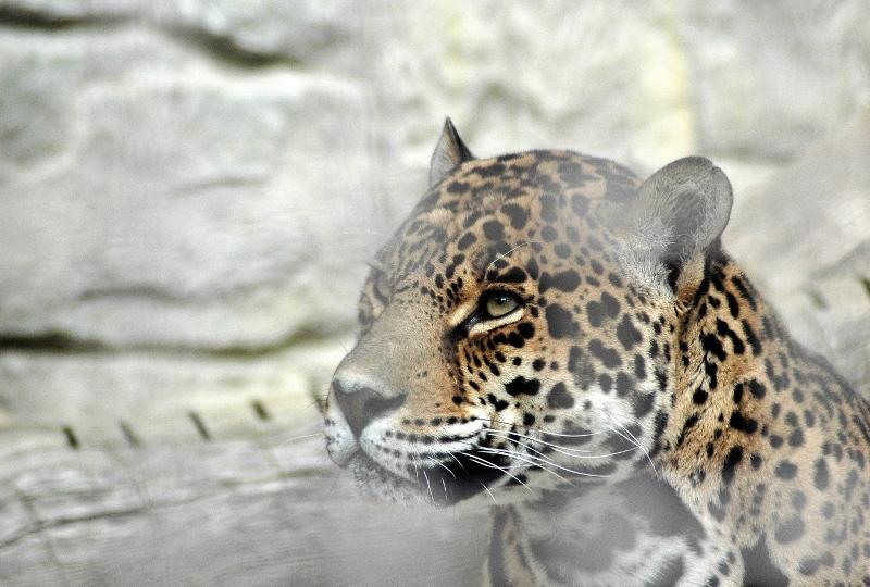 ジャガー5z