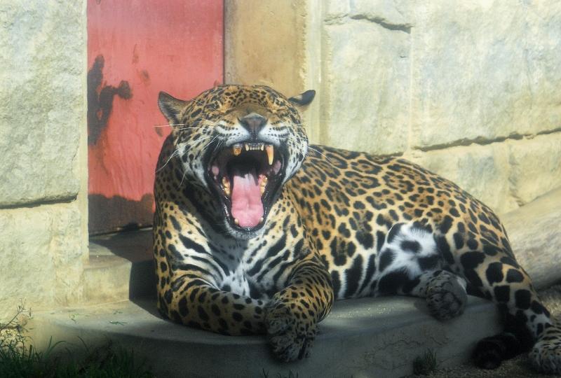 ジャガー4z