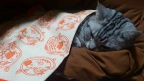 猫 ふろしき フロシキ