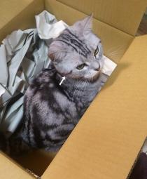 猫 クレオパトラライン