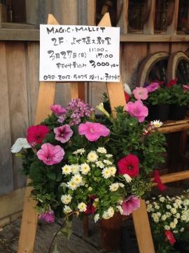 春☆季節のお花