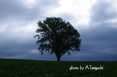 AKI_8956.jpg