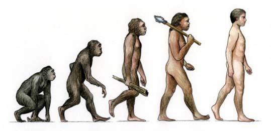 i人類の進化 19㎝252894