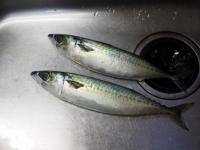 鯖のガーリックソテー01