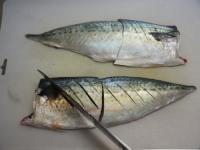 鯖のガーリックソテー16