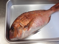 鯛の味噌汁19