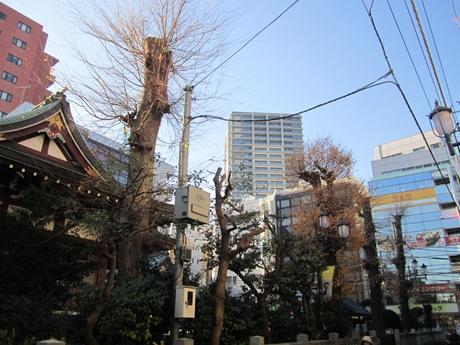 IMG_52842012_easter_kashiwa_easterkashiwa.jpg