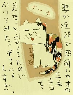 squarecat.jpg
