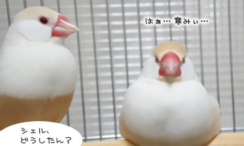 寒くても男は我慢_6