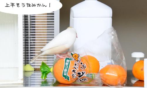 おみかん会議_2