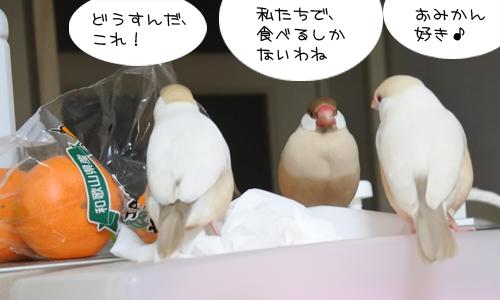 おみかん会議_3